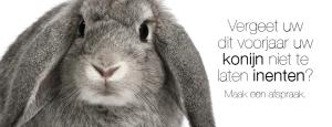 Vergeet niet uw konijn te enten