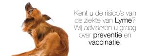 Ziekte van Lyme - preventief vaccin
