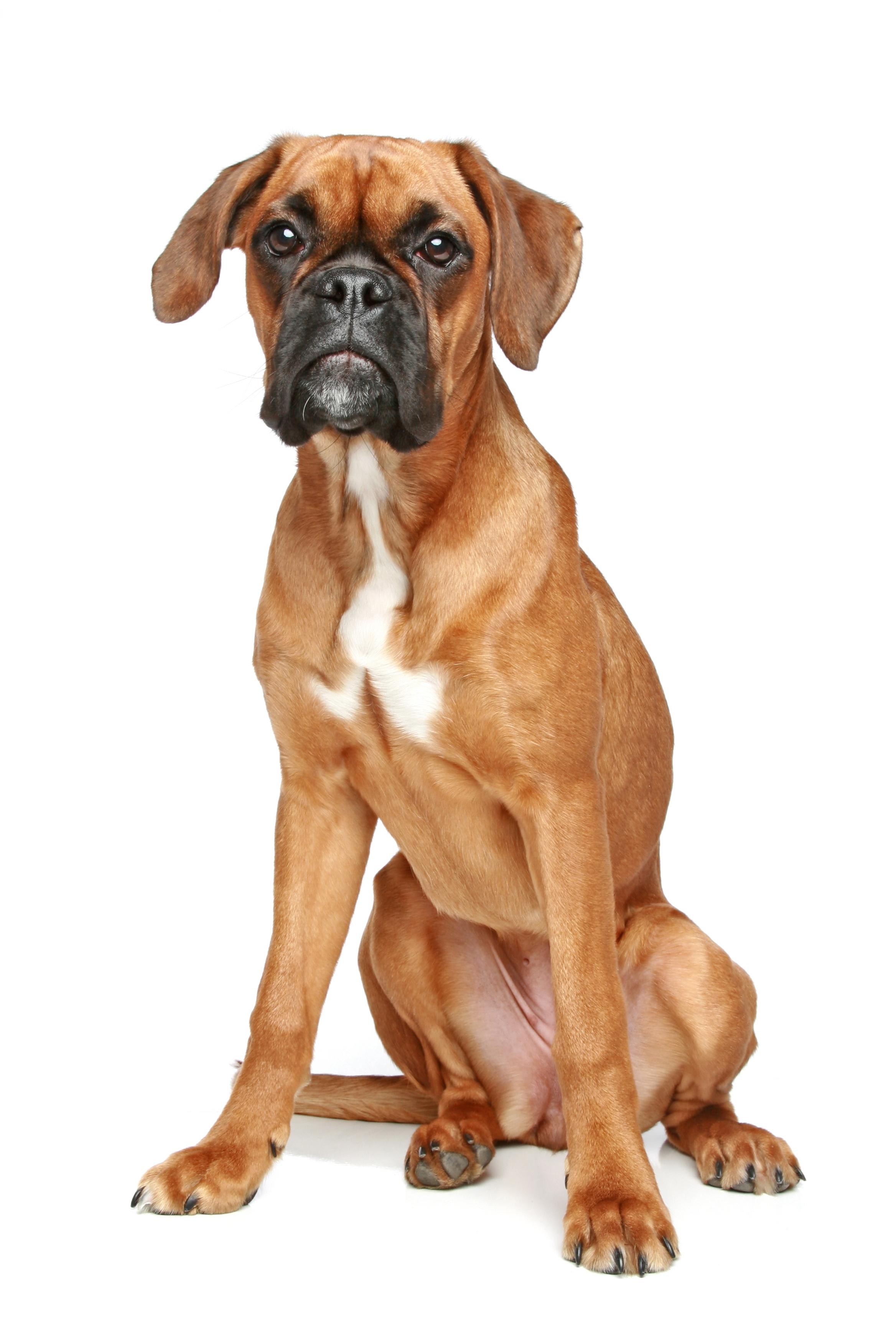 Allergie voor honden maar toch een hond