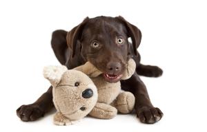 foto hond keerhoeve