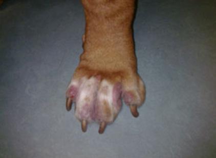 Allergie Planten Huid : Allergie bij de hond
