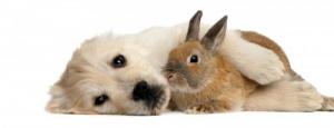 hond en konijn