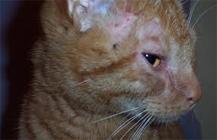 kat_allergie_huidproblemen2
