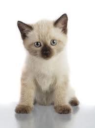 kitten Vaccinatie en ontworming van uw kitten