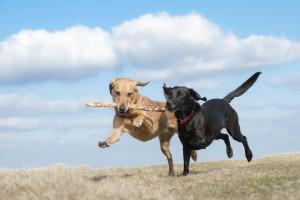 entkaart honden