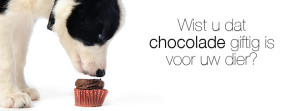 chocolade gifting voor uw hond