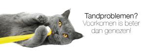 tandproblemen - tandenpoetsen bij uw huisdier!