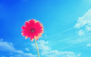blue-sky-flowers
